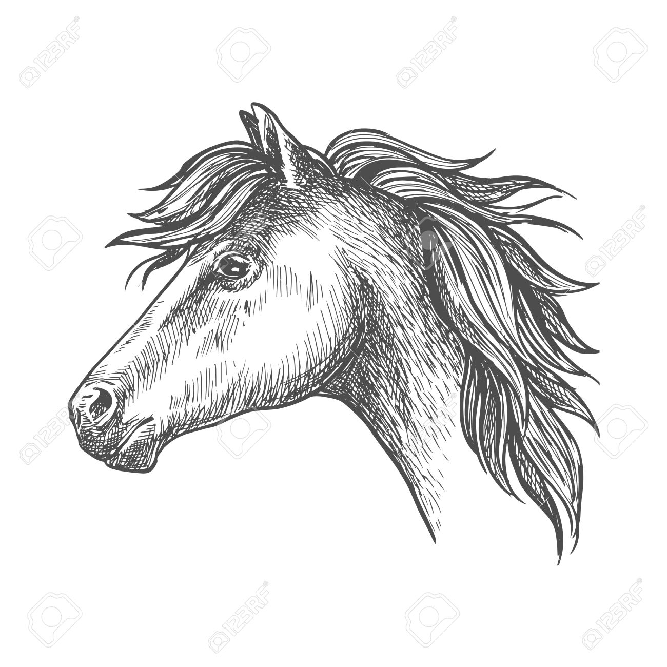1300x1300 Profile Of Heavy Farm Horse Isolated Sketch Icon Of Clydesdale