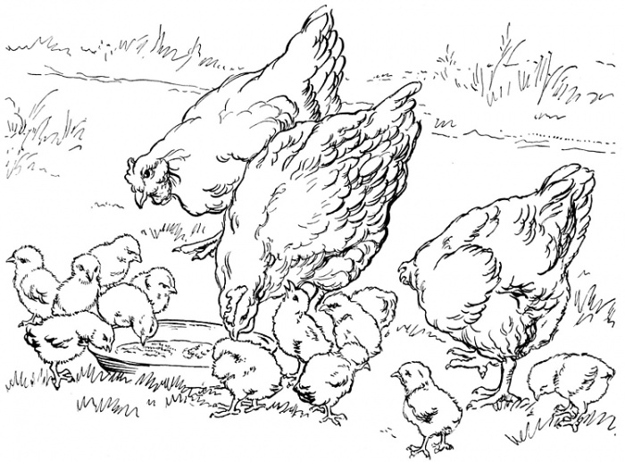 700x517 Farm Printable Coloring Pages
