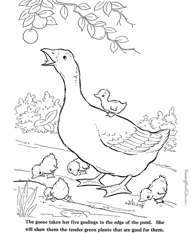 670x820 Free Rooster Pictures To Print Farm Animal Coloring Sheets