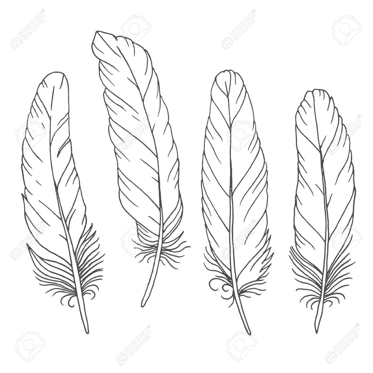 Line Art Feather : Feather drawing at getdrawings free for personal use