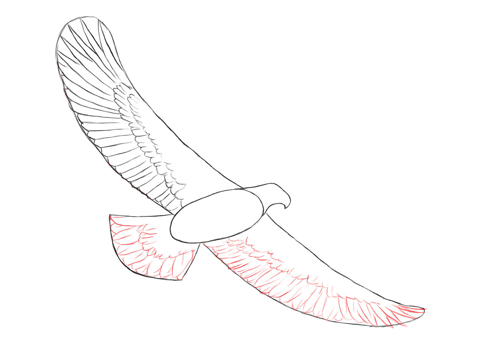 1600x1200 How To Draw An Eagle
