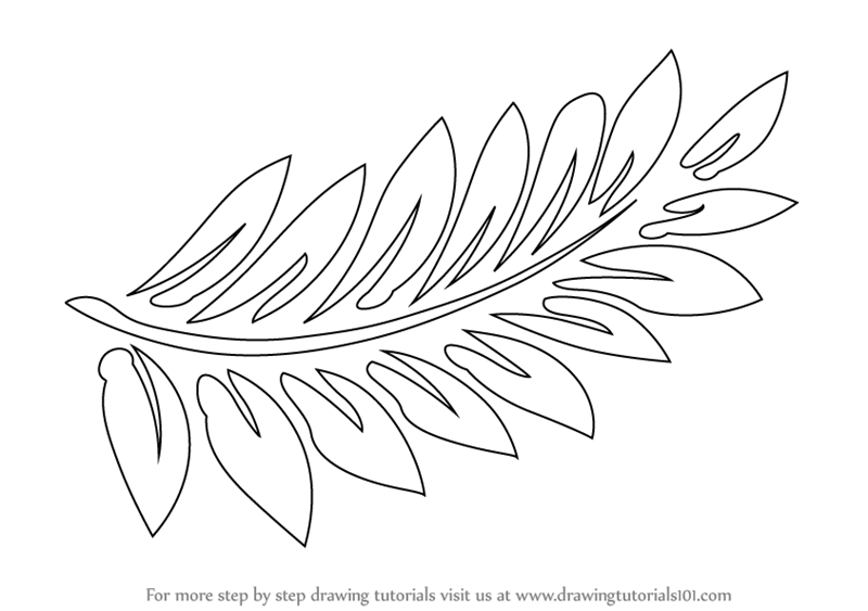 800x563 Learn How To Draw Fern Fronds (Plants) Step By Step Drawing