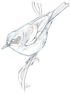 236x310 Learn To Simplify Bird Plumage With A Few Lines. Drawing Bird