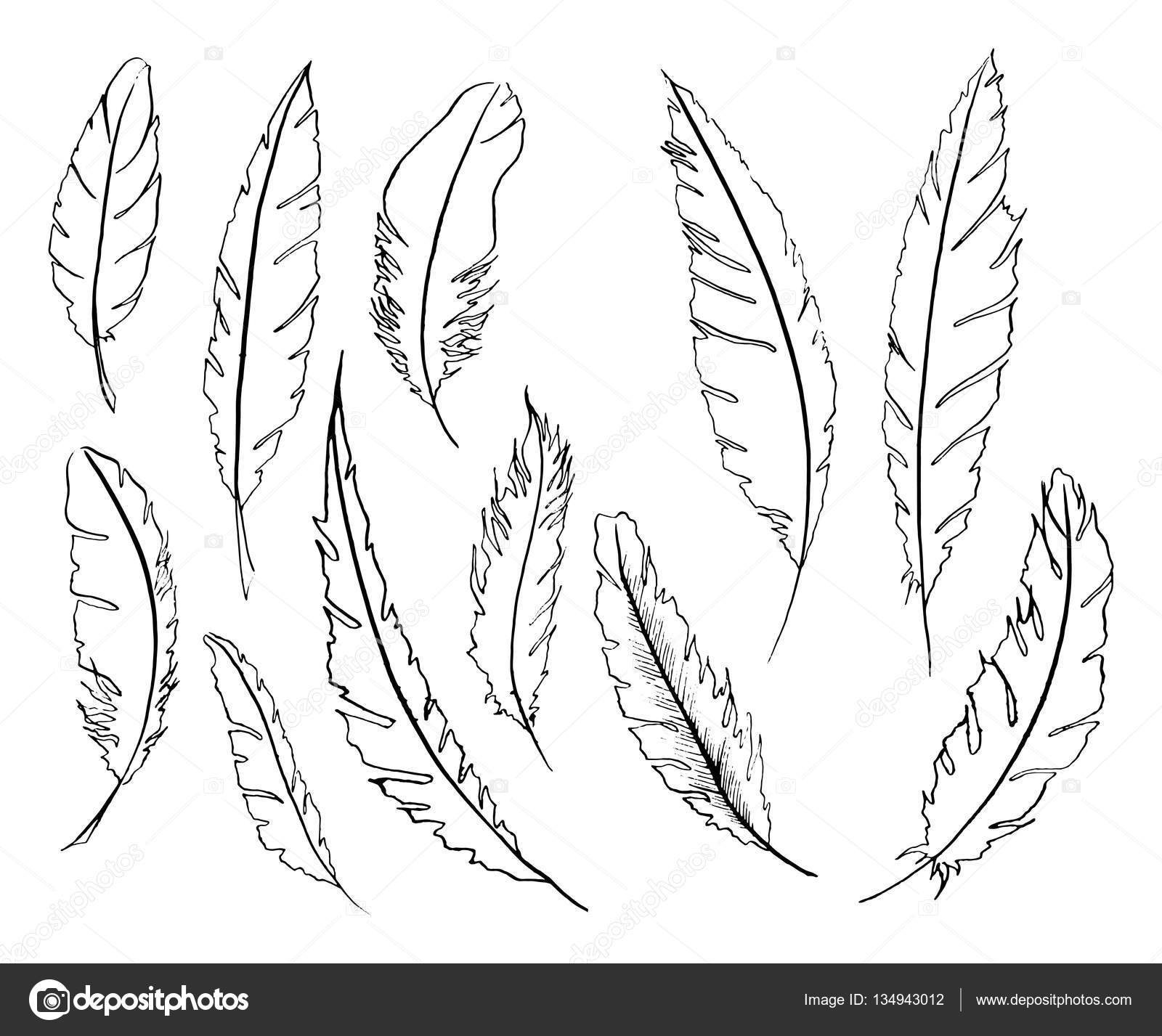 Feather Turning Into Birds Drawing at GetDrawings.com | Free for ...