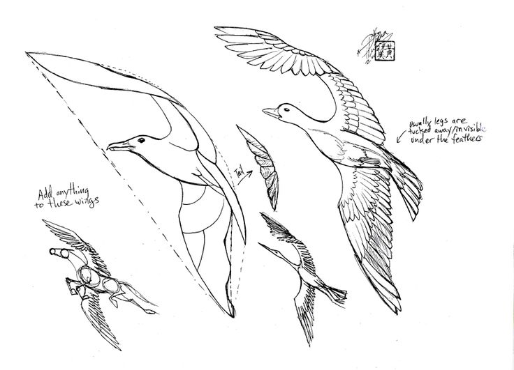 Feather With Birds Drawing