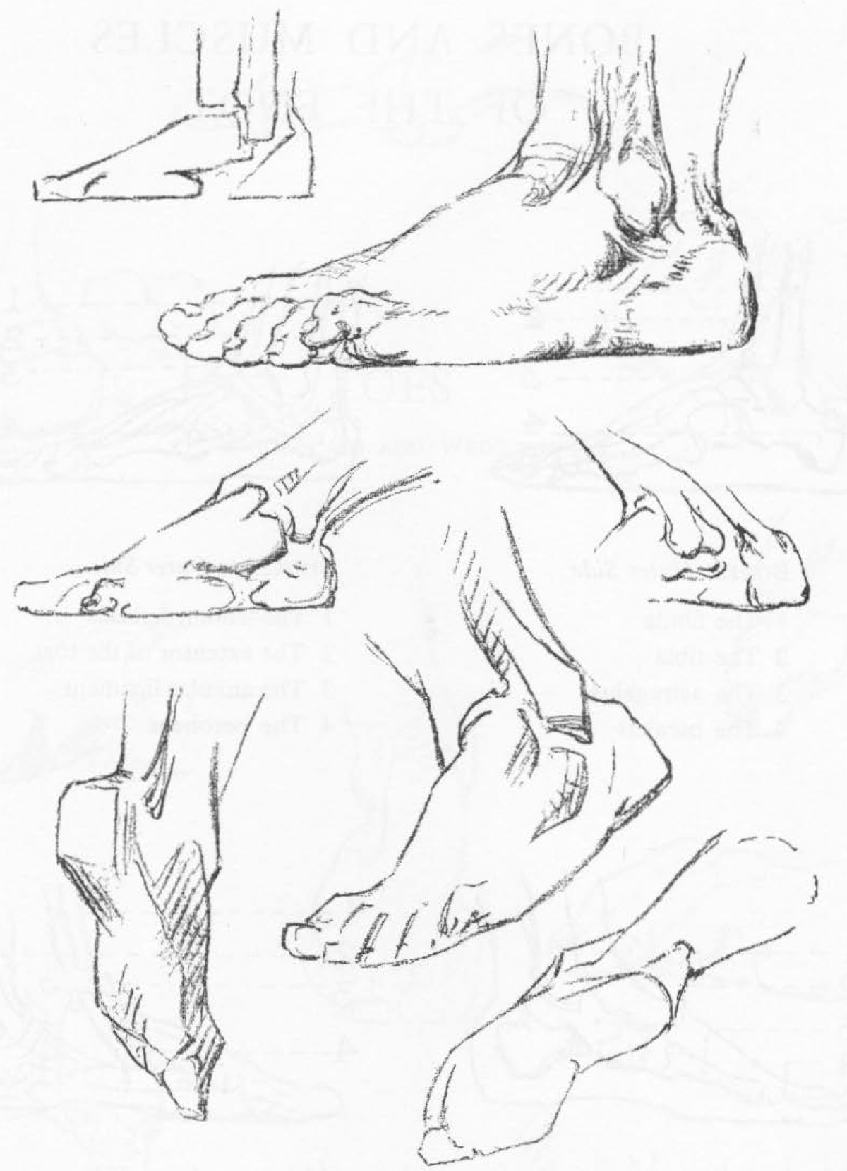 1200x1660 How To Draw The Foot Drawing Feet And The Anatomy Of Them