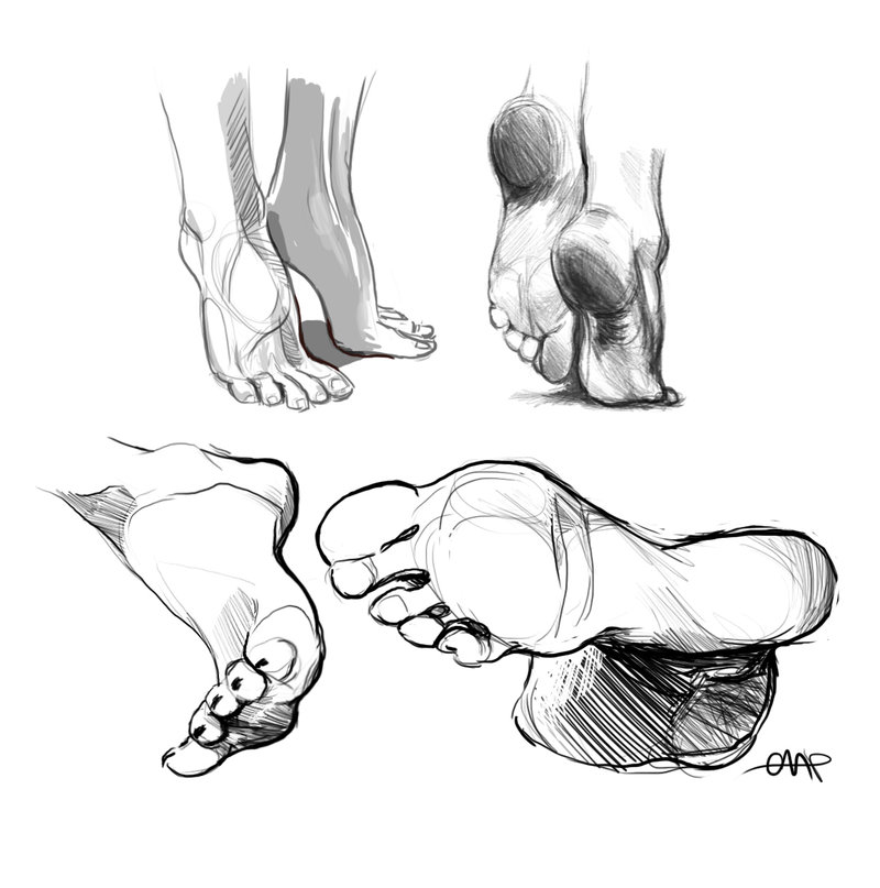 800x807 Anatomy Foot Studies Digital By Yolque