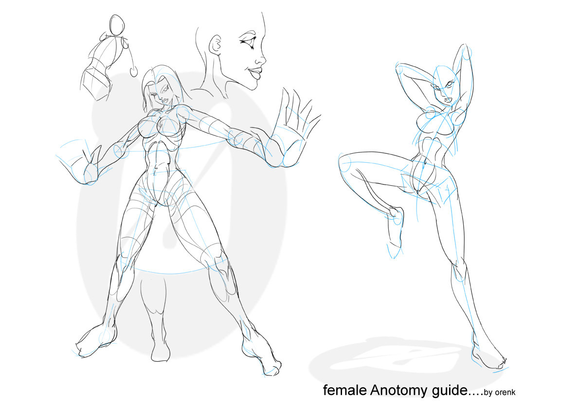 1190x842 Female Anatomy By Orenk