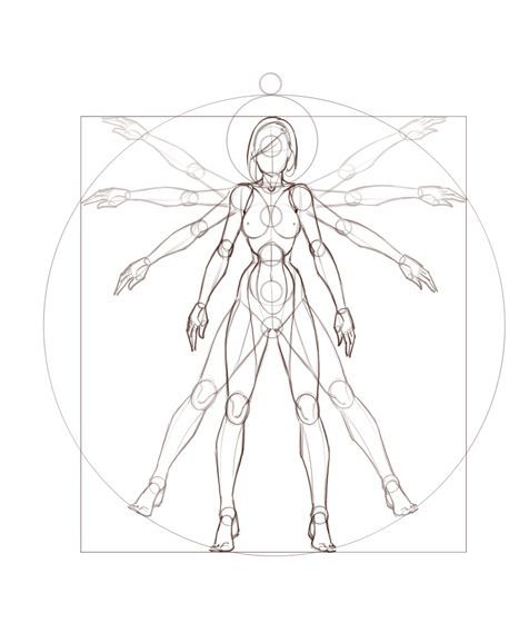 Female Body Anatomy Drawing At Getdrawings Free For Personal
