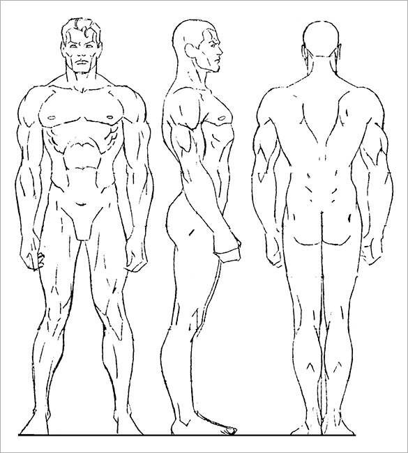 585x650 Pictures Human Drawing Template,