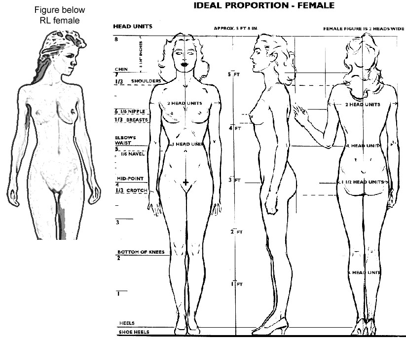 human proportions chart - Mersn.proforum.co