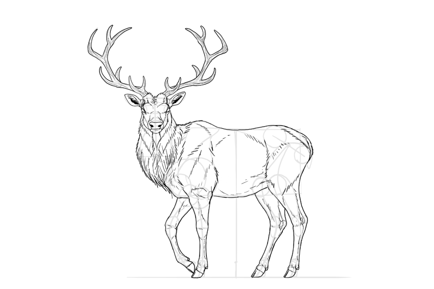 Female Deer Drawing at GetDrawings.com | Free for personal use ...