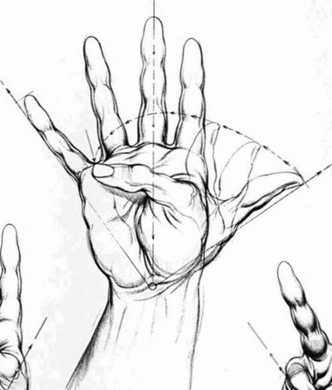 Hand Reference Drawing | Asdela