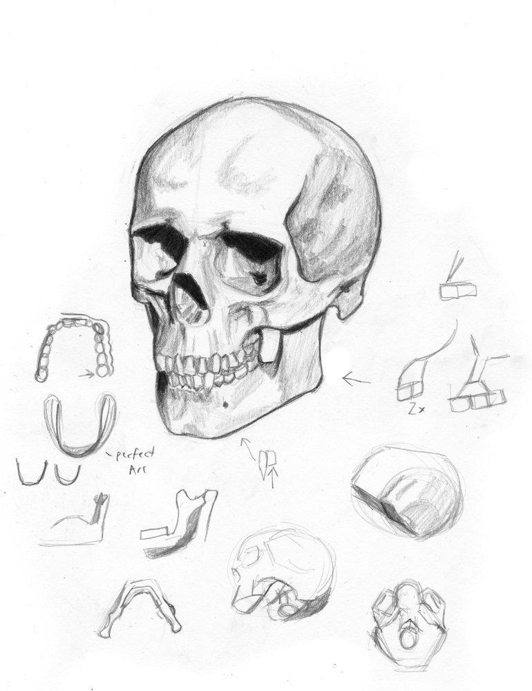 770x1000 Alan North On Twitter Female Skull Study, Again Using