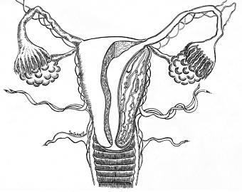 340x270 Female Anatomy Etsy