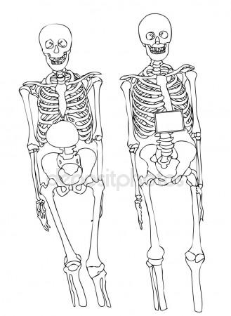 Female Skeleton Drawing At Getdrawings Free For Personal Use