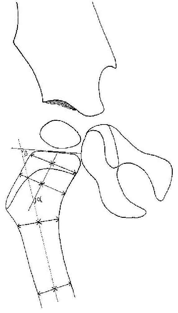 Ausgezeichnet Kaninchen Anatomie Und Dissektion Führungs Bilder ...