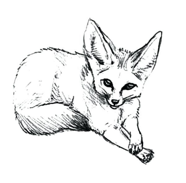 600x592 Coloring Pages Fox 86 Packed With Pin Drawn Fox Desert Fox 1