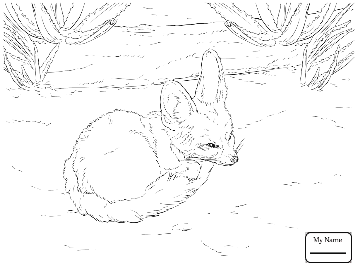 Fennec Fox Drawing at GetDrawings