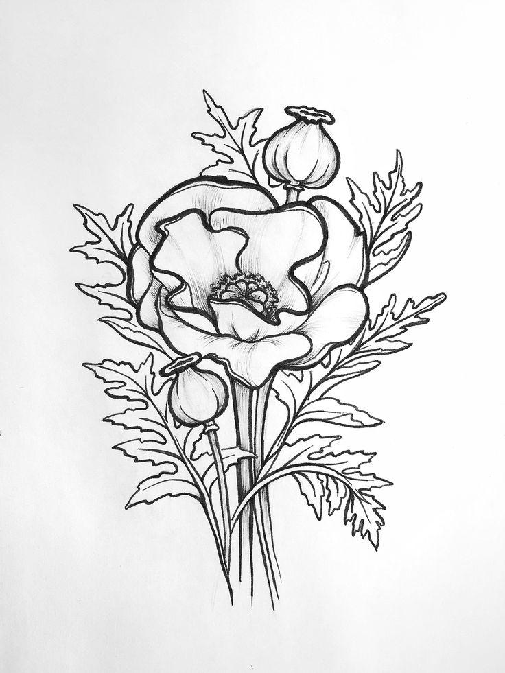 Fern Botanical Drawing
