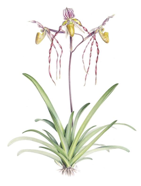 600x790 76 Best Botanical Illustrations Images On Botanical