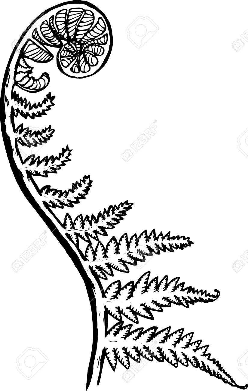 Line Drawing Of New Zealand : Fern line drawing at getdrawings free for personal