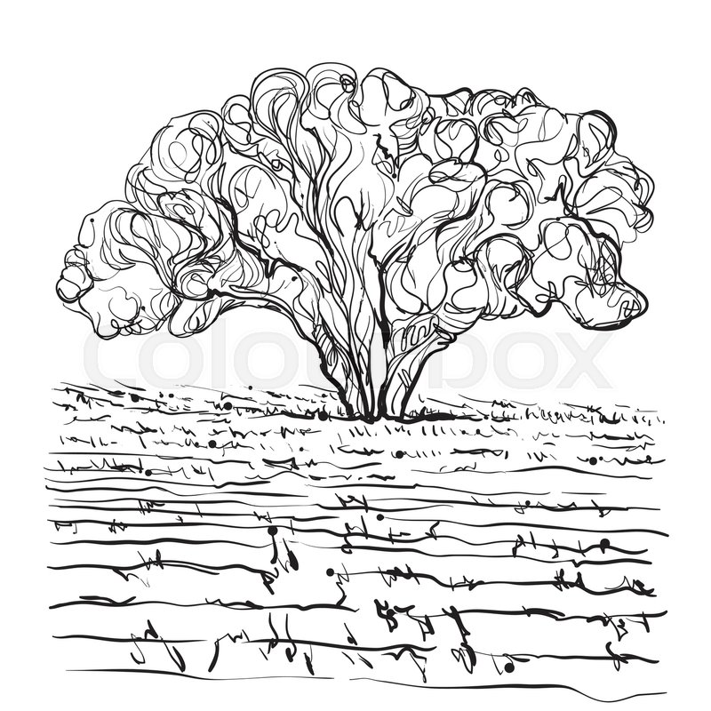 800x800 Hand Drawn Fields And Tree. Doodles Landscape Stock Vector