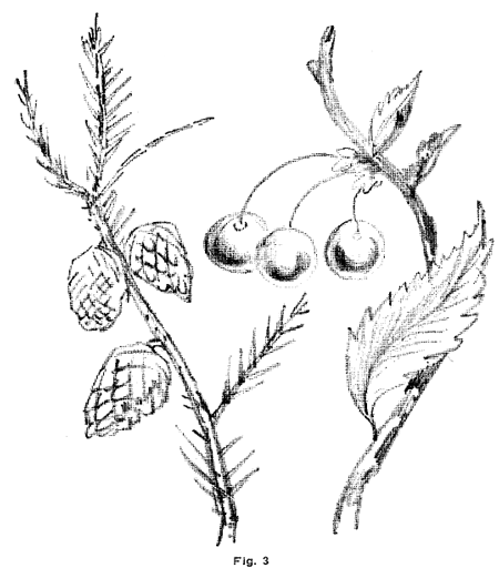 450x512 Drawing Flowers, Plants, Weeds, And Leaves With Drawing Lessons
