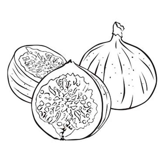 700x617 Fig Coloring Page Fig Tree Coloring Page