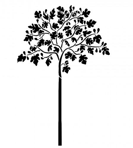 448x500 Large Fig Tree