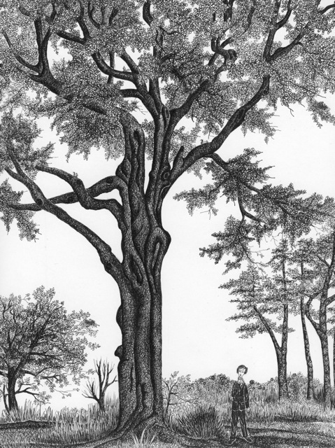 479x640 Trees On Behance