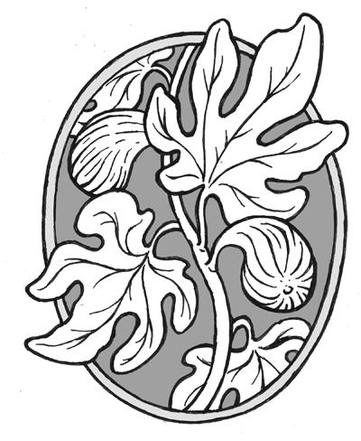 400x488 Fig Tree Drawing