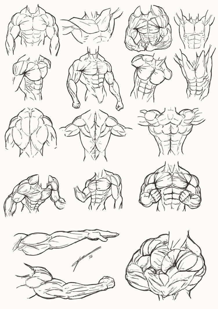 751x1063 Male Torso Anatomy 2012 By Juggertha
