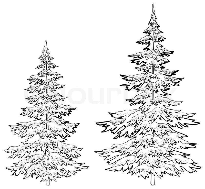 800x739 Get This Hi Res Stock Photo Christmas Trees Under Snow On A White