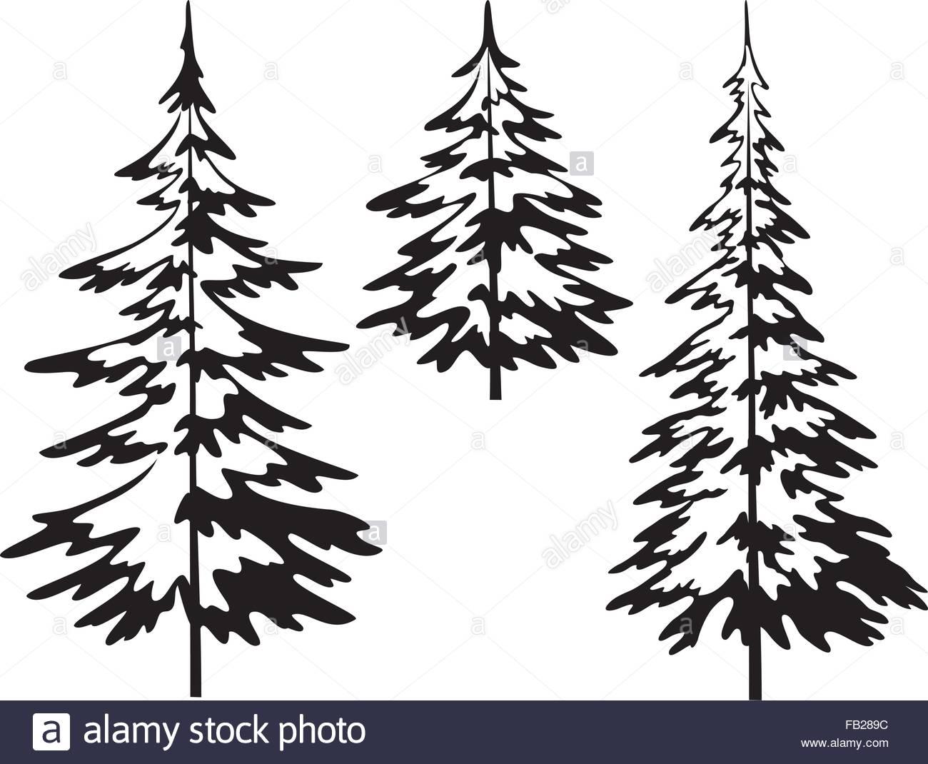 1300x1070 Christmas Fir Tree, Contours Stock Vector Art Amp Illustration
