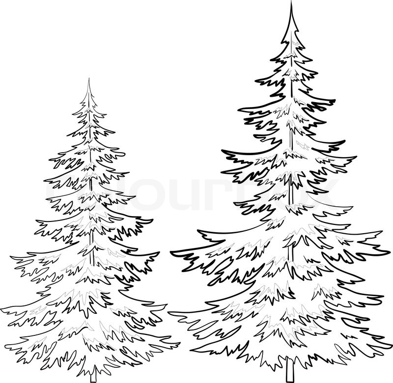 800x780 Trees, Fur Tree, Vector, Christmas Winter Symbol, Isolated