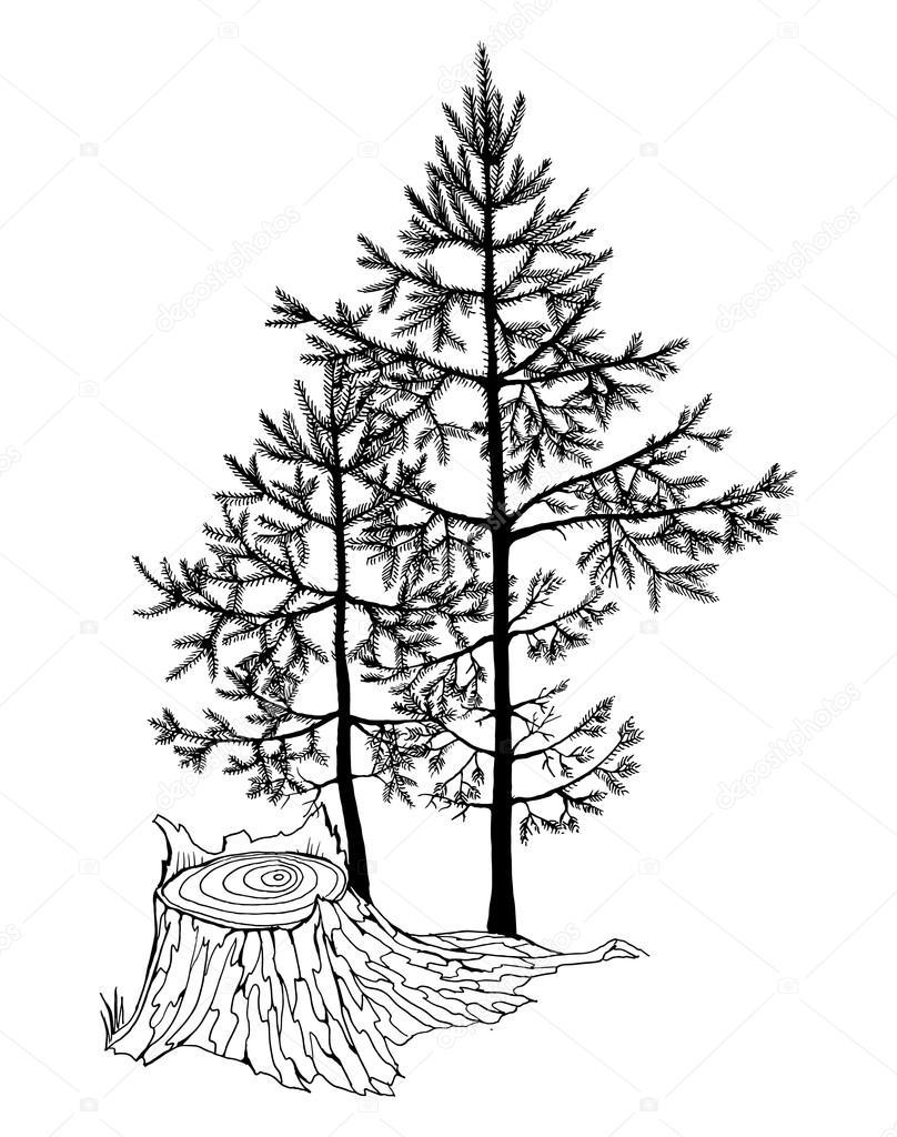 808x1024 Small Fir Trees In A Forest Stock Vector Irina Oksenoyd