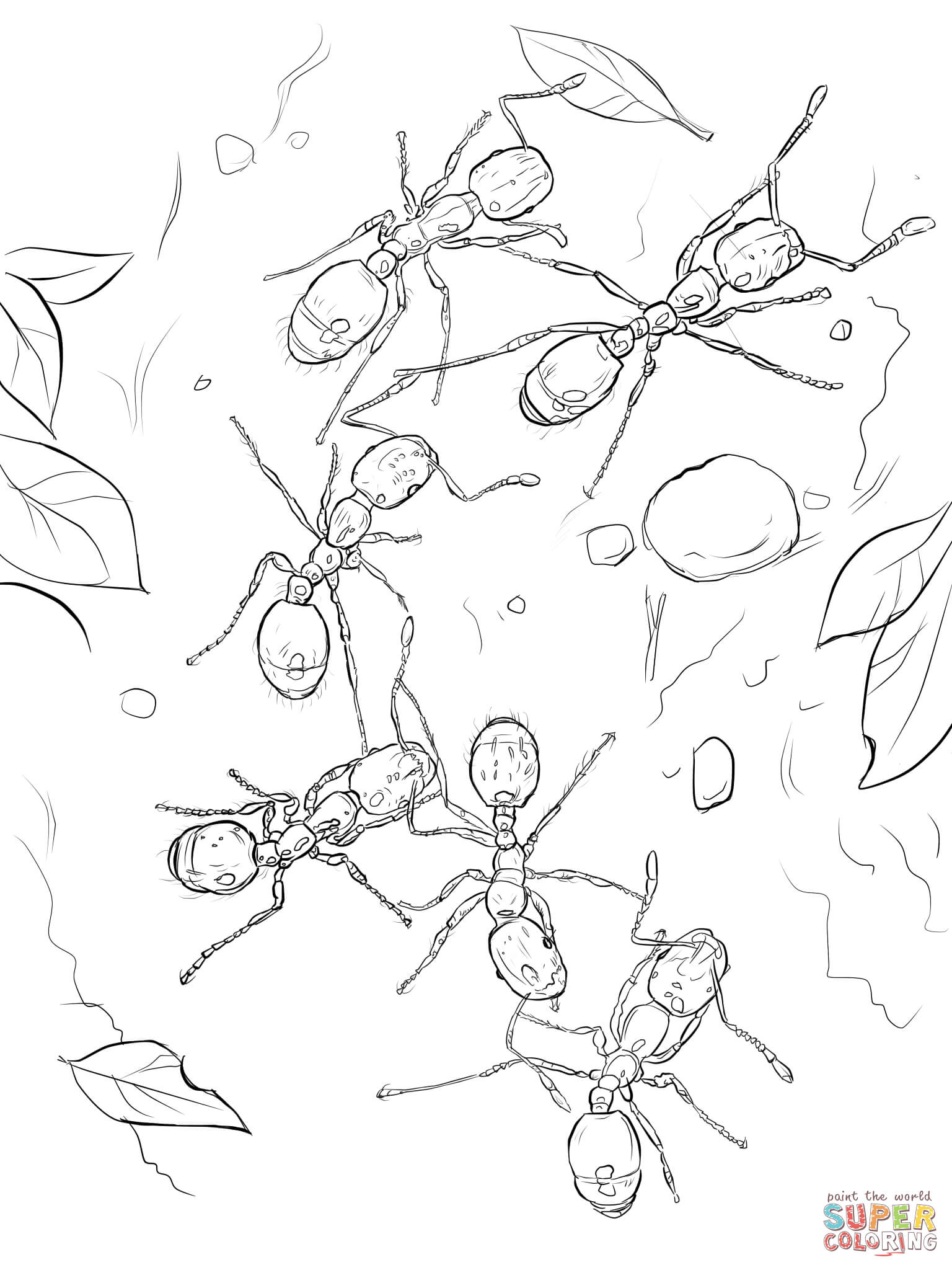 1536x2048 Fire Ants Coloring Page Free Printable Coloring Pages