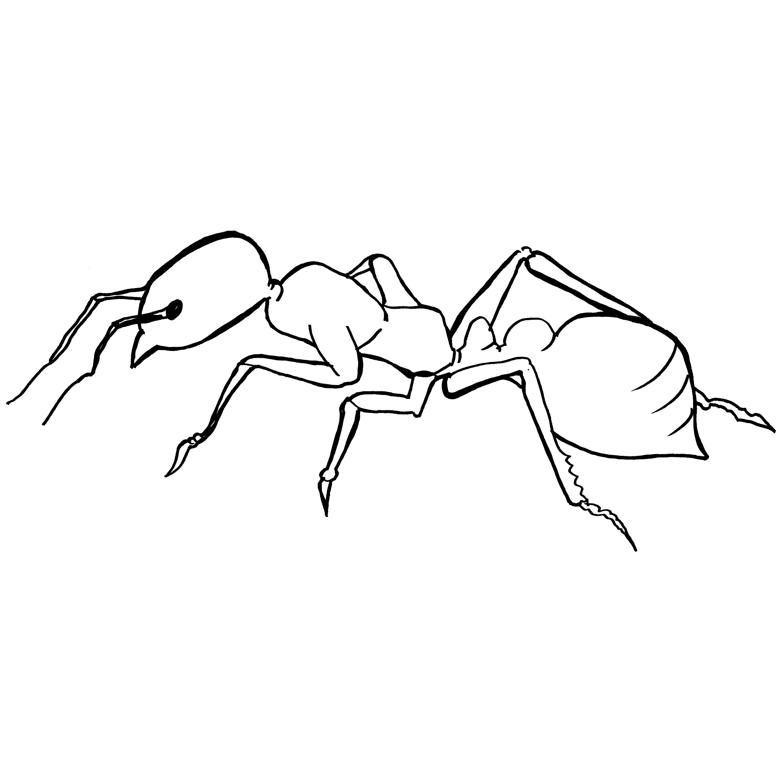 2560x2560 Printable Fire Ant Coloring Page For Toddlers