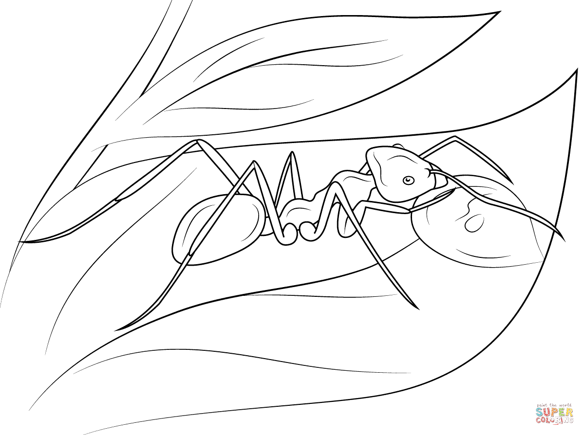1199x894 Red Wood Ant Coloring Page Free Printable Coloring Pages