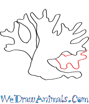 300x350 How To Draw A Fire Coral