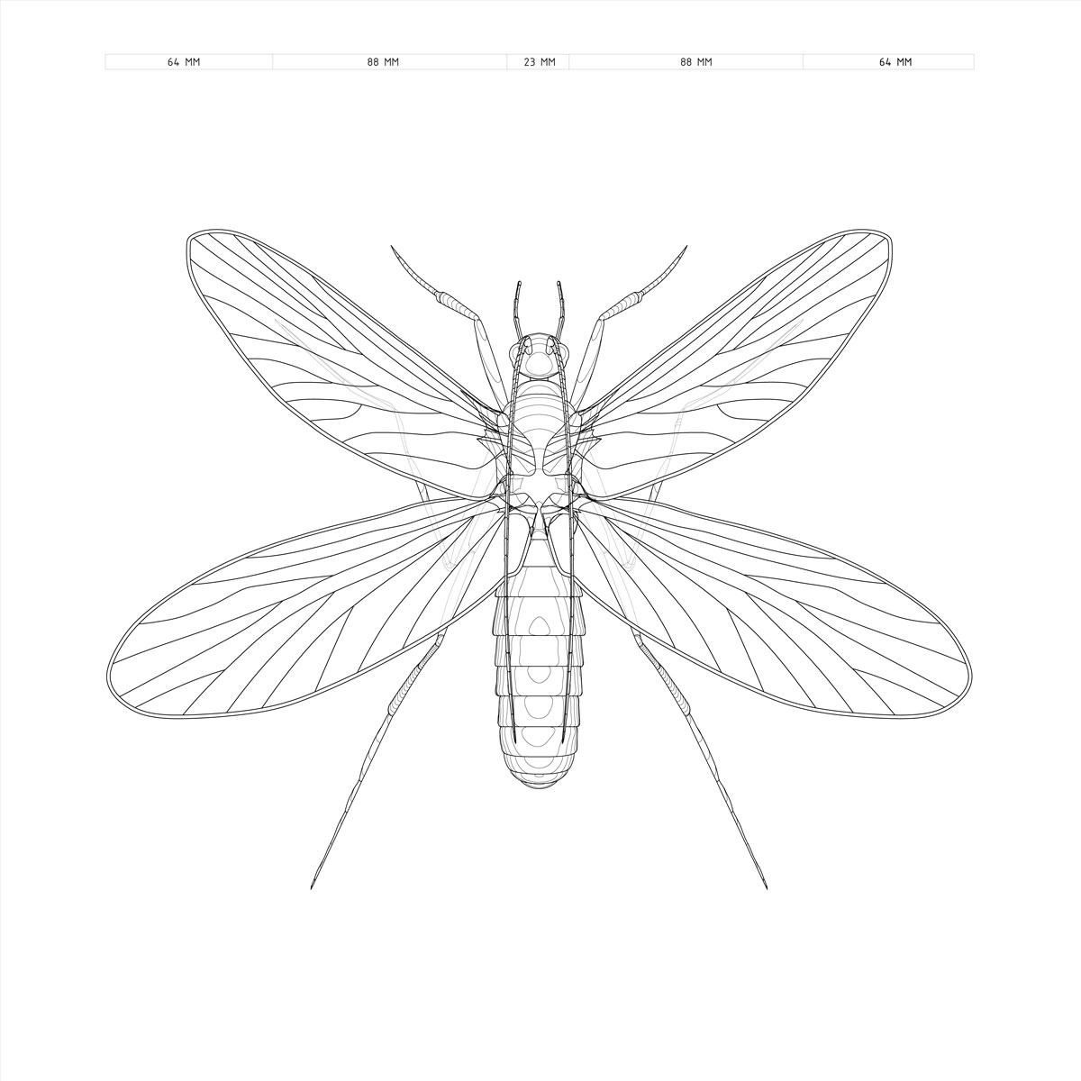 Firefly Insect Drawing at GetDrawings | Free download