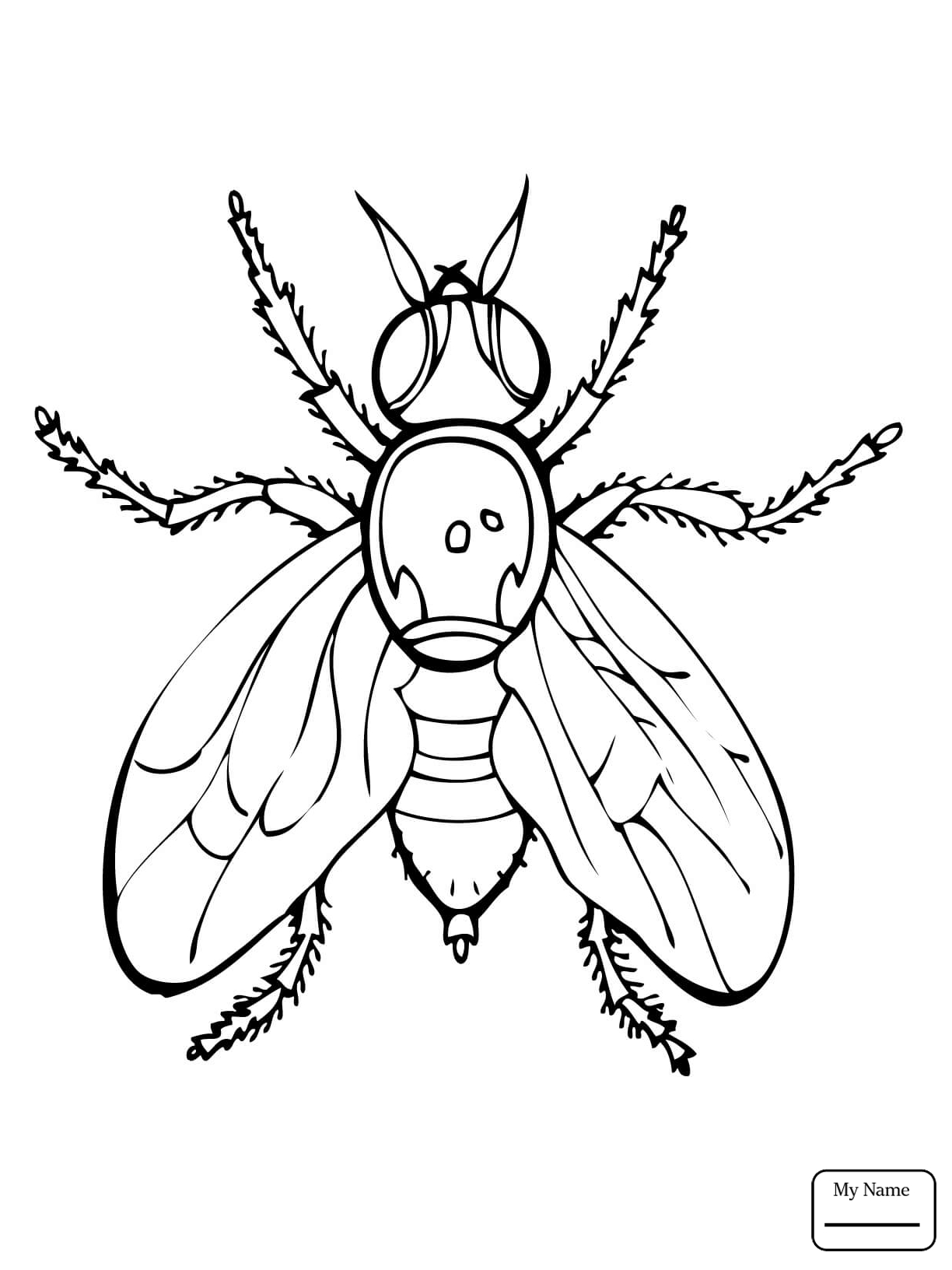 Firefly Insect Drawing at GetDrawings.com | Free for personal use ...