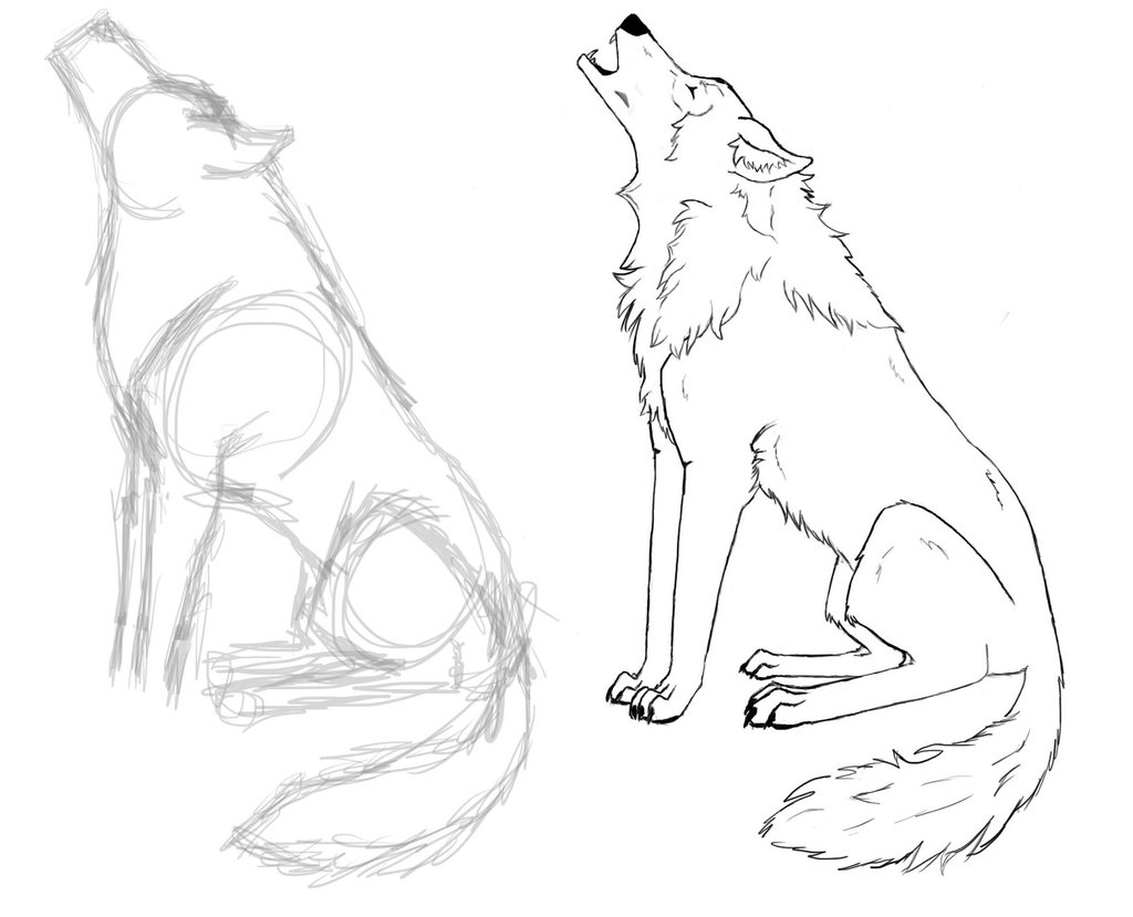 1024x829 Wolf Drawing