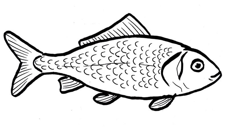 800x448 Fish Draw