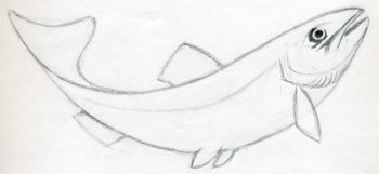 350x161 How To Draw A Fish