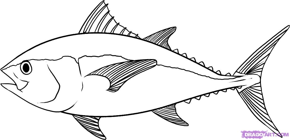 1174x570 How to Draw a Tuna, Step by Step, Fish, Animals, FREE Online
