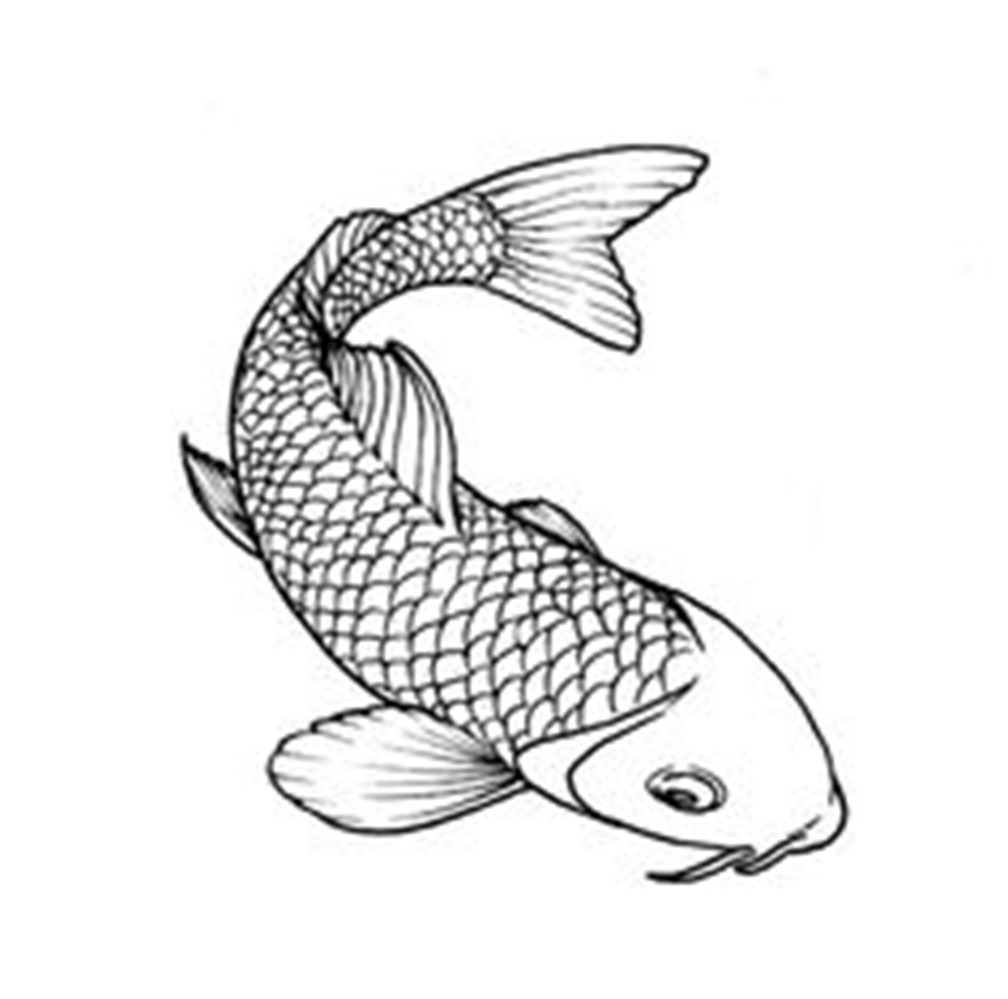 1008x999 Koi Fish Drawing