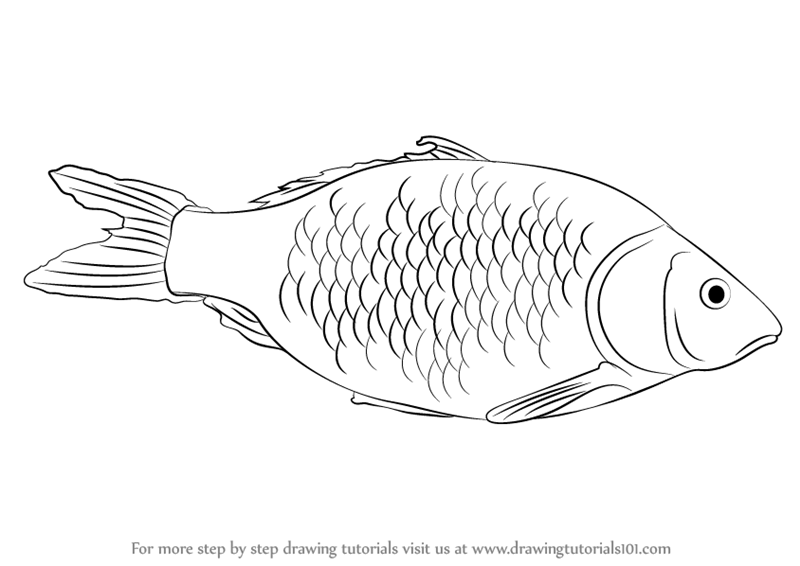 800x566 Learn How to Draw a Fish (Fishes) Step by Step Drawing Tutorials