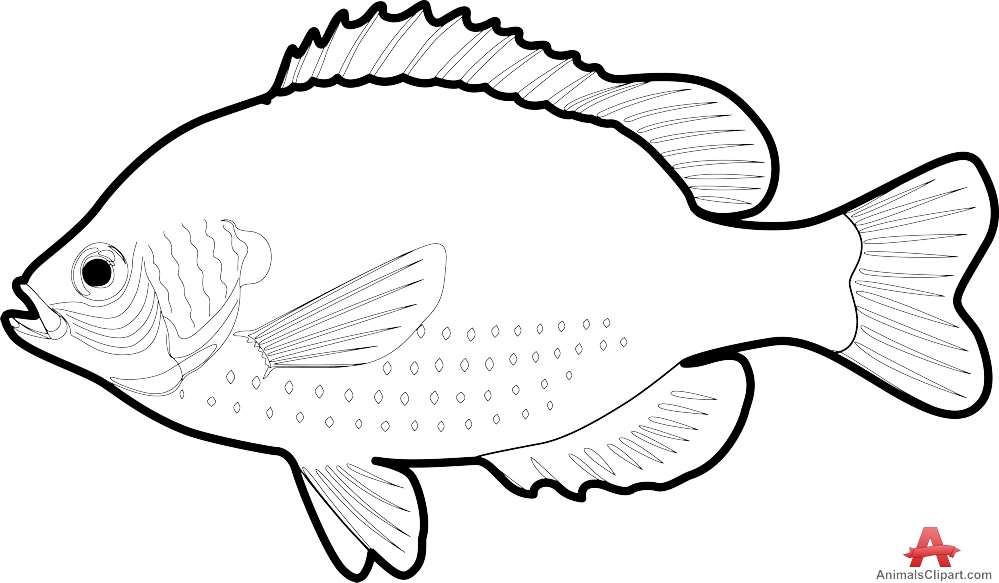 999x583 Outline Fish Drawing Contour Free Clipart Design Download